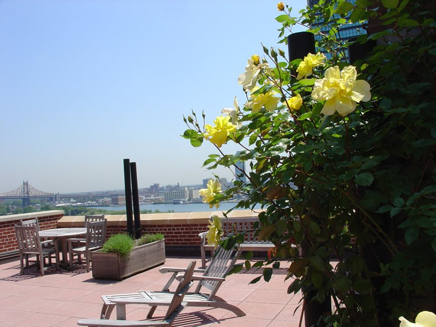 New York City Real Estate | View 333 East 43rd Street, #801 | Roofdeck Garden