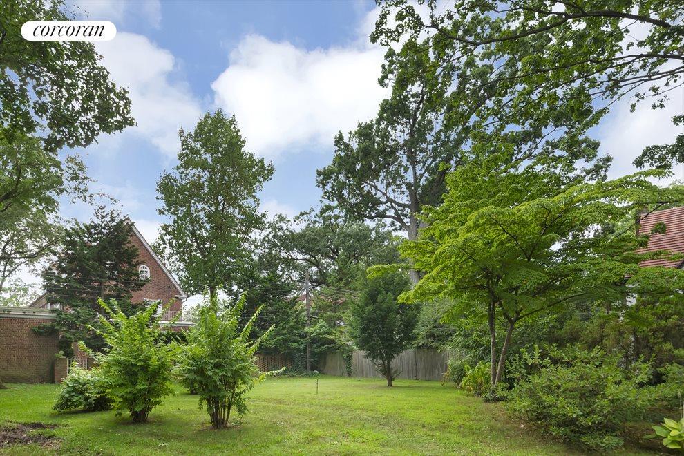Common Backyard