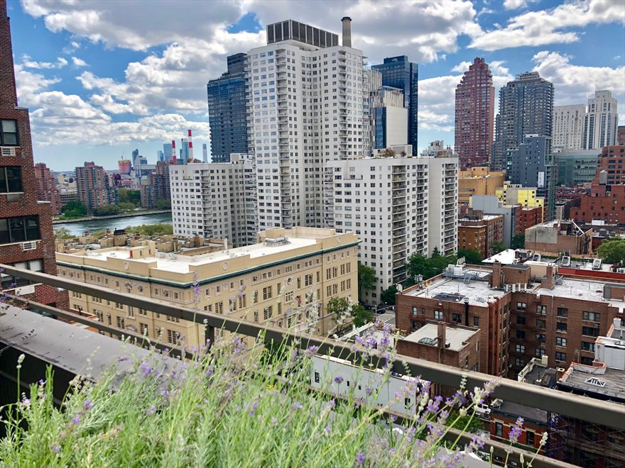 New York City Real Estate | View 440 East 79th Street, #9F | 360 degree views of Manhattan skyline from roof.