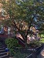 391 8th Street, Apt. 2, Park Slope