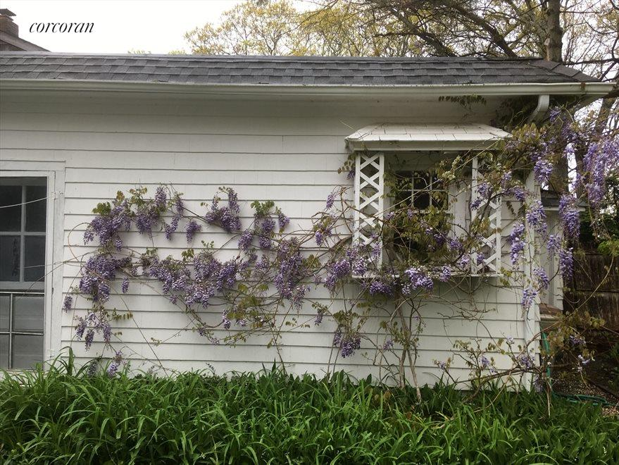 Wisteria on attached garage