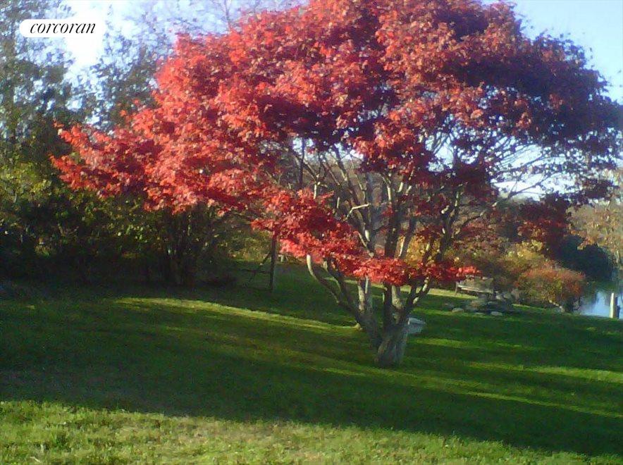 montauk tree