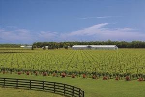 Big E Farm, Jamesport
