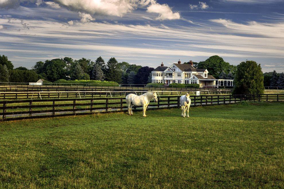 Manor House & Horses