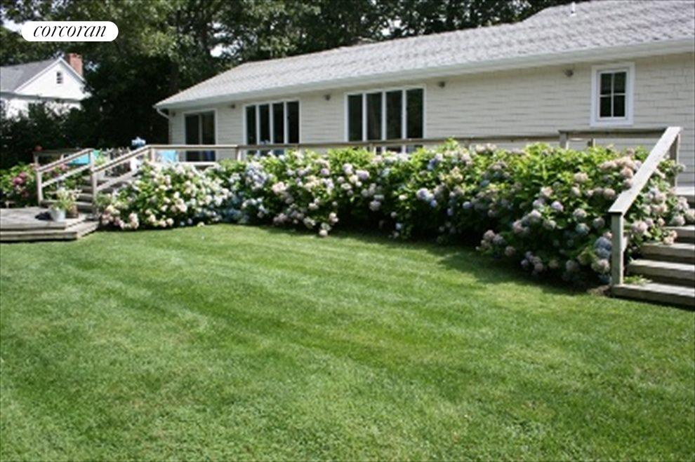 Hydrangeas in bloom all summer long