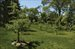 400 Ferry Road, beautiful orchards