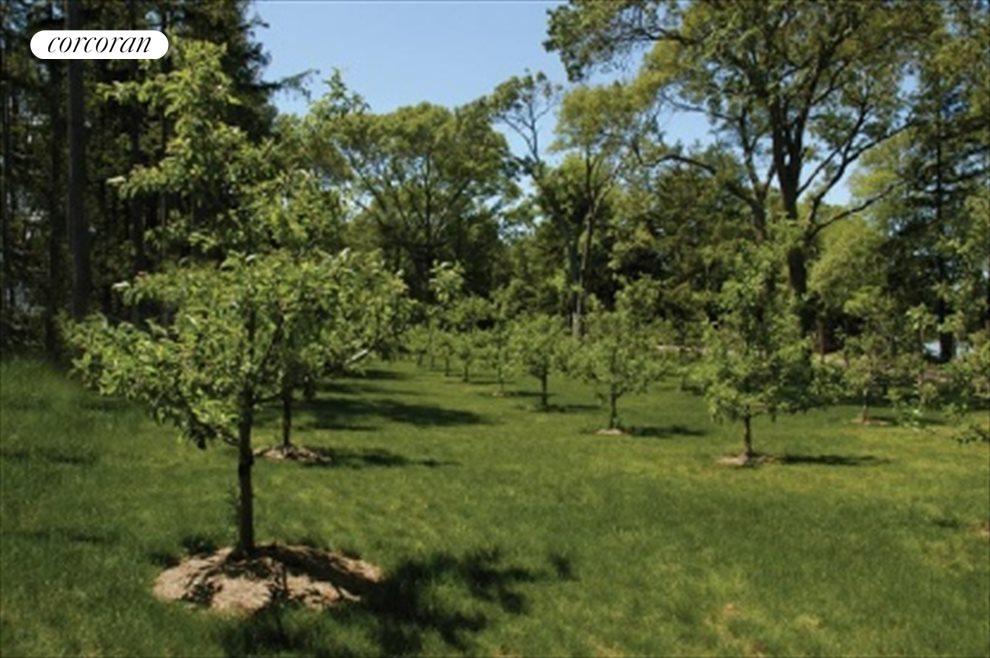 beautiful orchards