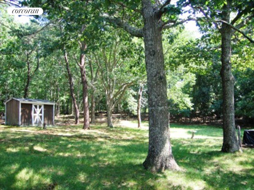 Established Trees on One Acre