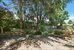 556 77th Street, Backyard