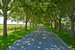 Sagaponack, tree lined canopied driveway